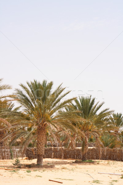オアシス いい 手のひら 砂漠 夏 アフリカ ストックフォト © jonnysek