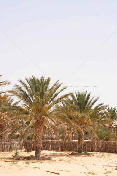 Oasis Nice palmiers désert été Afrique Photo stock © jonnysek
