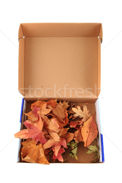 Abstract colore foglie finestra isolato bianco Foto d'archivio © jonnysek