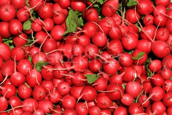 Radijs vers Rood mooie plantaardige voedsel Stockfoto © jonnysek