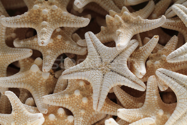 sea stars background Stock photo © jonnysek