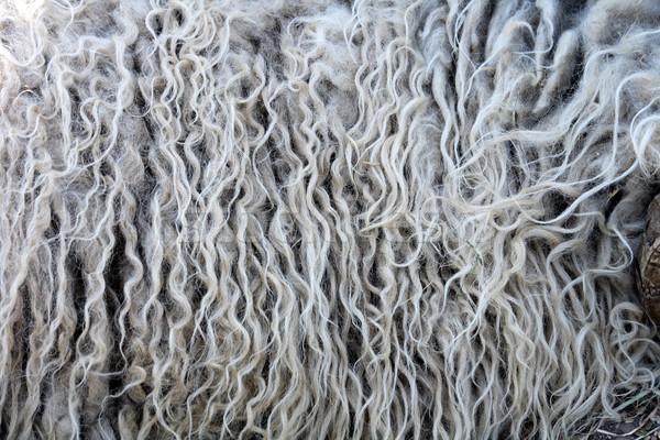 fleece background Stock photo © jonnysek