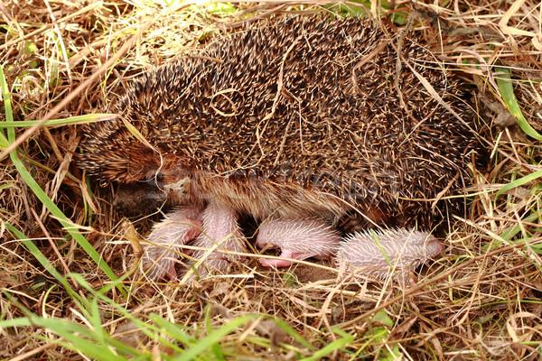 Anne güzel aile bebek çim doğa Stok fotoğraf © jonnysek