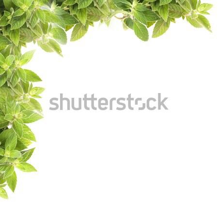 mint background Stock photo © jonnysek
