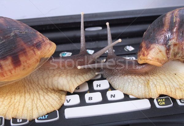 snails and keyboard Stock photo © jonnysek