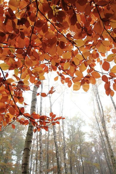 Jesienią żółty parku kolor drzew nice Zdjęcia stock © jonnysek