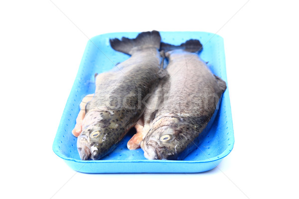 fresh trouts Stock photo © jonnysek