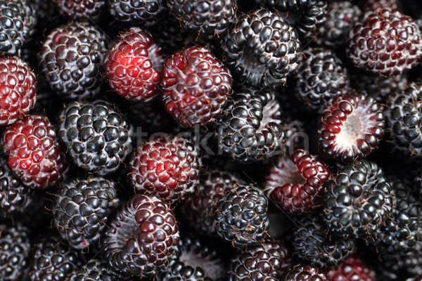 blackberries background Stock photo © jonnysek