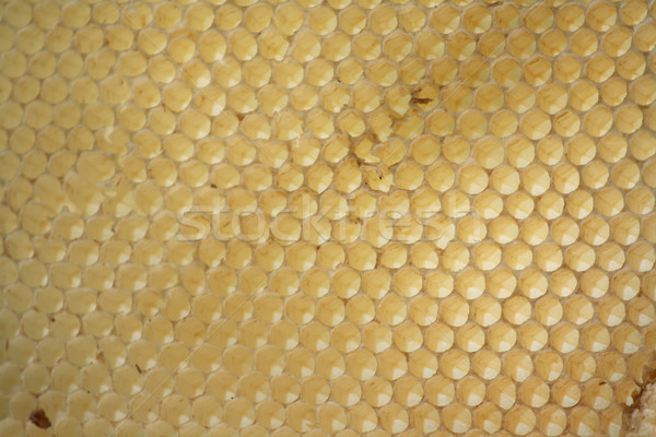 empty honey cells Stock photo © jonnysek