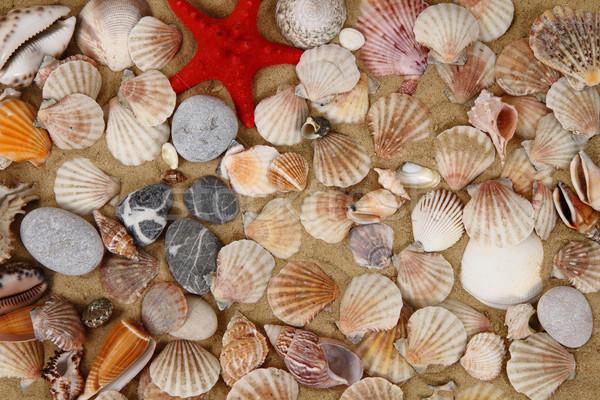 Verano mar conchas amarillo arena agradable Foto stock © jonnysek
