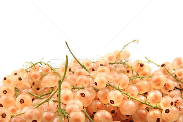 white currant  Stock photo © jonnysek