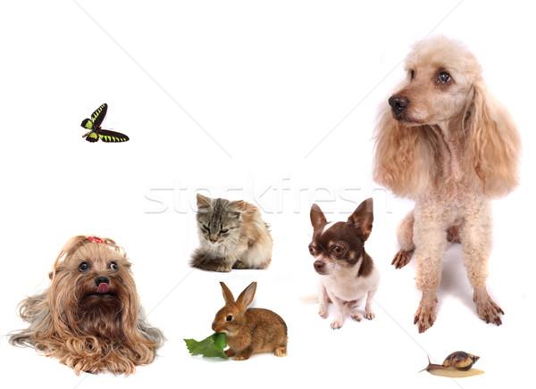 動物 犬 猫 蝶 ウサギ カタツムリ ストックフォト © jonnysek
