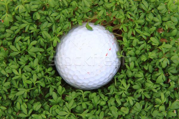watercress and golf ball  Stock photo © jonnysek