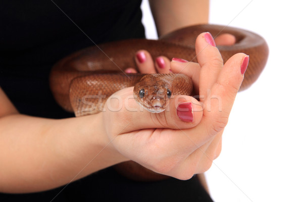 Szivárvány kígyó emberi kezek izolált fehér Stock fotó © jonnysek