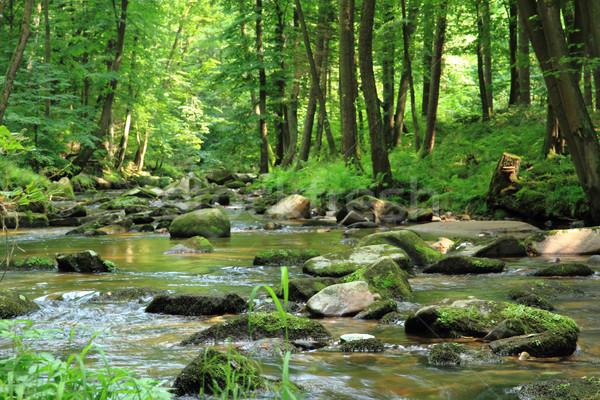 Stock fotó: Kicsi · folyó · zöld · erdő · tavasz · tájkép