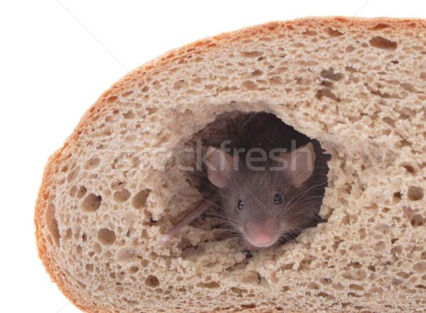 Muis brood huis geïsoleerd witte voedsel Stockfoto © jonnysek
