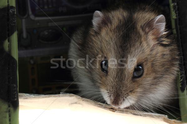 Jonge hamster huis haren achtergrond Stockfoto © jonnysek