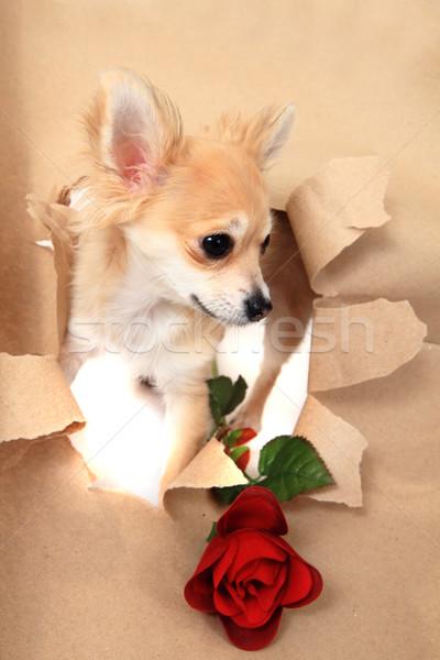 Carta marrone buco rosa piccolo dolce cane Foto d'archivio © jonnysek