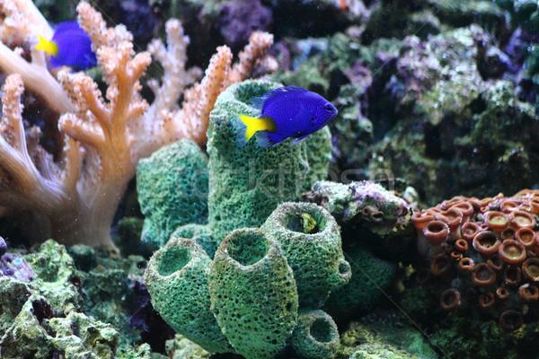 аквариум природного морем растений Nice природы Сток-фото © jonnysek
