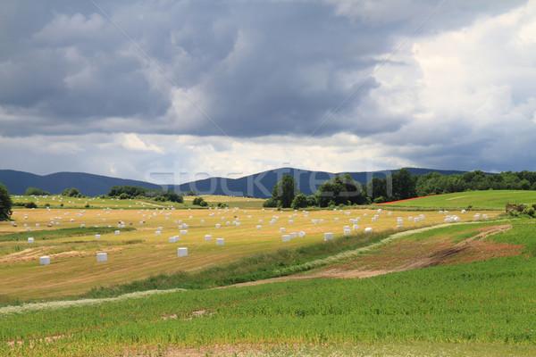 Cseh ősz vidék szalmaszál természet háttér Stock fotó © jonnysek