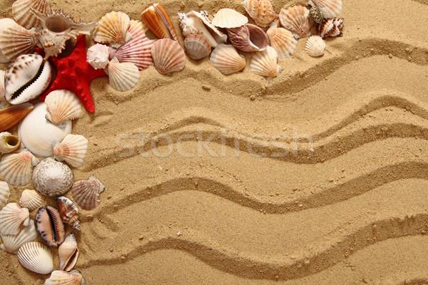 sea shells and yellow sand Stock photo © jonnysek