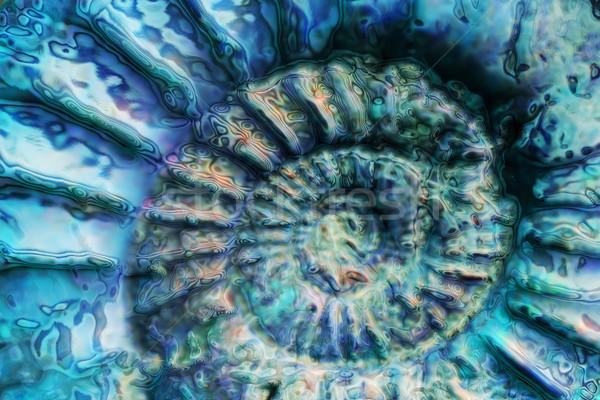 abstract blue spiral Stock photo © jonnysek