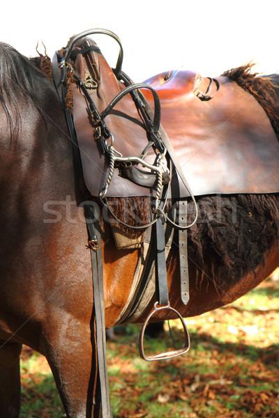 At eyer detay kahverengi deri yarış Stok fotoğraf © jonnysek