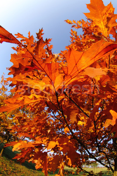 Stockfoto: Oude · boom · bos · natuur · schoonheid