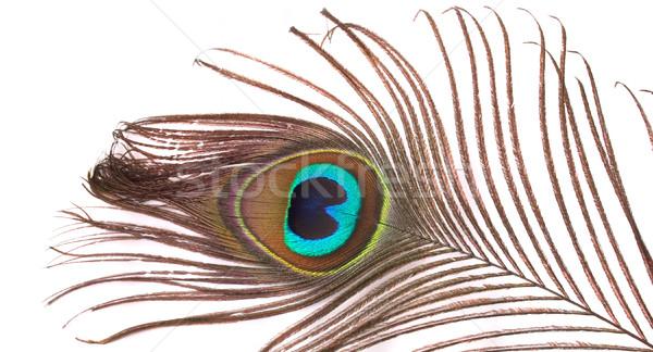 羽毛 孔雀 色 白 塗料 美 ストックフォト © jonnysek
