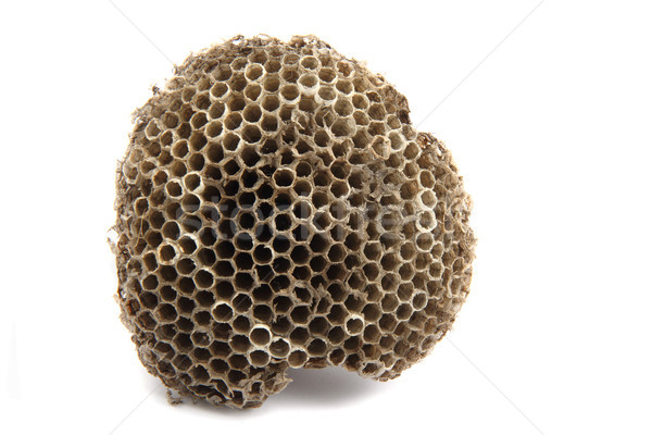 Wesp nest klein geïsoleerd witte papier Stockfoto © jonnysek