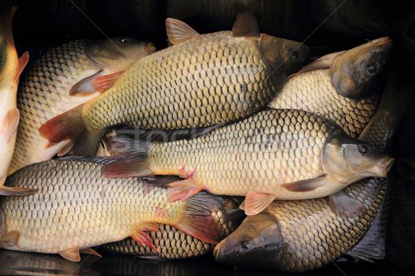 Karpfen Fische Weihnachten Überlieferung Essen Stock foto © jonnysek