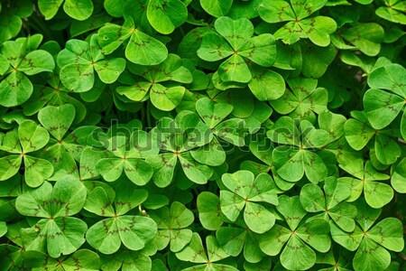 Foto d'archivio: Verde · felice · foglie · texture · nice · naturale