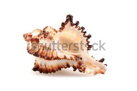 Mer shell isolé blanche plage spa Photo stock © jonnysek