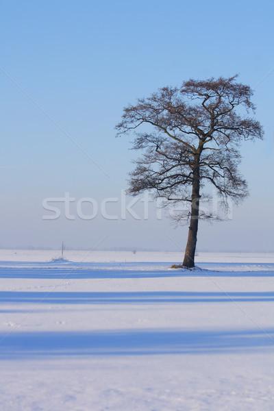 tree in the winter  Stock photo © jonnysek