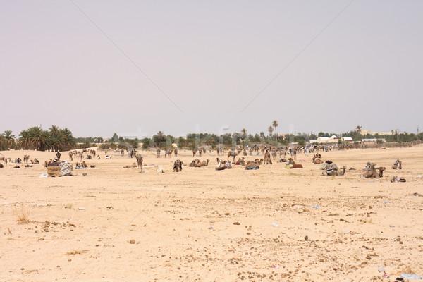 Camellos sáhara secar Túnez cielo sol Foto stock © jonnysek