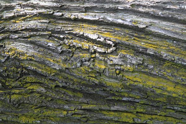 Tölgyfa ugatás textúra szép természetes fa Stock fotó © jonnysek