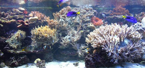 exotic fishes Stock photo © jonnysek