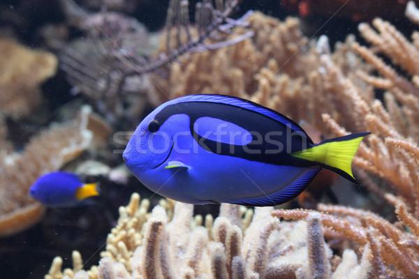 aquarium background Stock photo © jonnysek