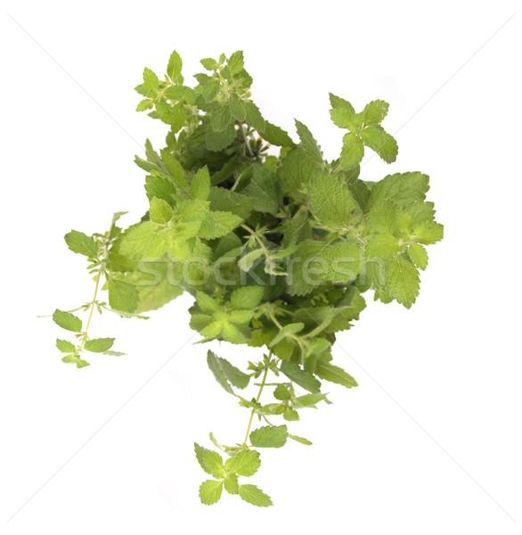 Verde erva fresco branco primavera cozinha Foto stock © jonnysek