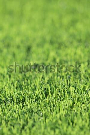 plastic green grass background Stock photo © jonnysek