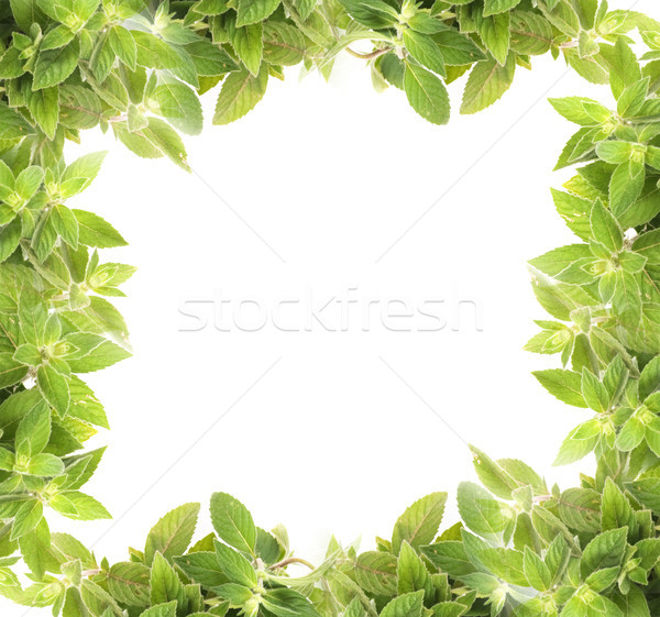 mint background Stock photo © jonnysek