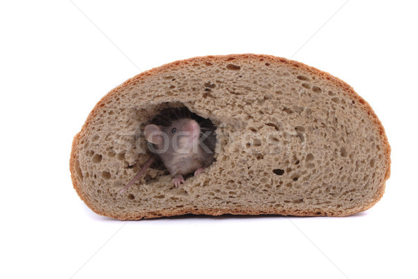 mouse and the bread Stock photo © jonnysek