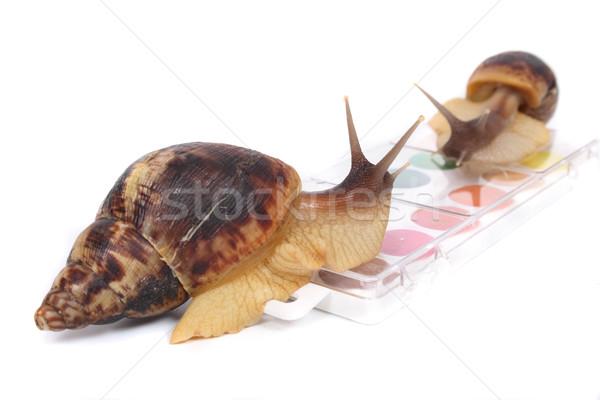 Büyük kahverengi dizayn kutu hızlandırmak renk Stok fotoğraf © jonnysek