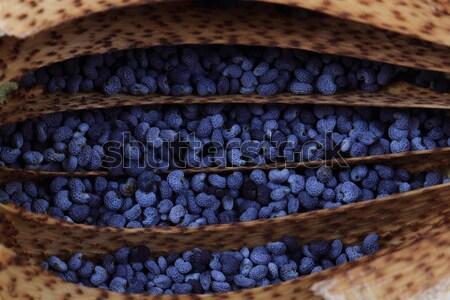 Haşhaş tohumları doku güzel doğal çiçek Stok fotoğraf © jonnysek