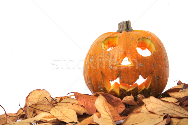 halloween pumpkin Stock photo © jonnysek