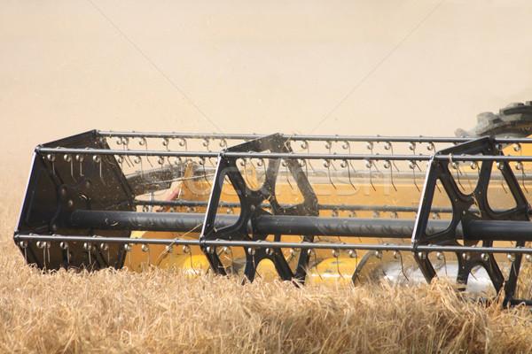 corn harvester Stock photo © jonnysek