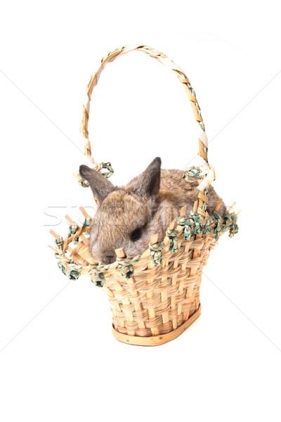easter rabbit Stock photo © jonnysek