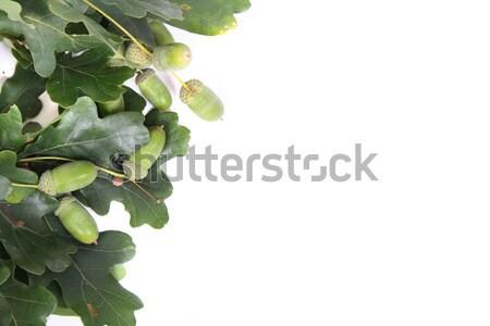 autumn background Stock photo © jonnysek