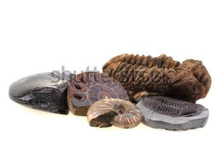 öreg gyűjtemény izolált fehér háttér kagyló Stock fotó © jonnysek
