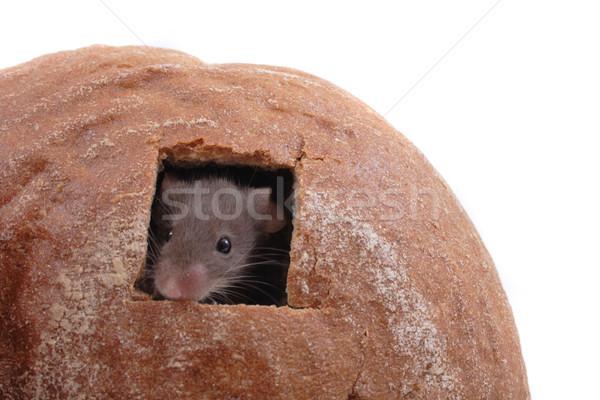 Mouse casa isolado branco comida saúde Foto stock © jonnysek